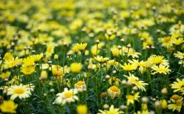URL: http:wallpaperswide com two wet yellow flower wallpapers html 276