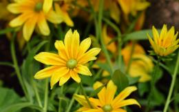 Yellow flowers HD Wallpaper 1920x1080 Yellow flowers HD Wallpaper 968