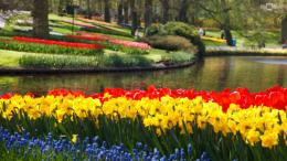 park full of tulips HD wallpaper010 1940