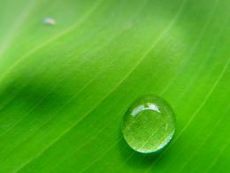 Green Leaves Water Drops Wallpapers | PIXHOME 516