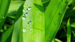 water drops on green leaf wallpaper water drops on green leaf for 480