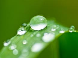 Wallpapers Planet: Water drops on leaf Wallpapers 518