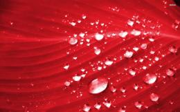 Red Leaf water drop 1013