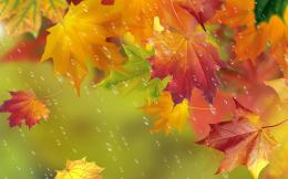 Autumn, red leaves, maple, water drops, rain Wallpaper | 1440x900 1725