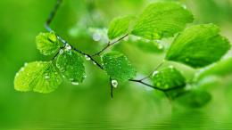 water drops on leaves wallpapers hd green leaves water droplets ripple 1280