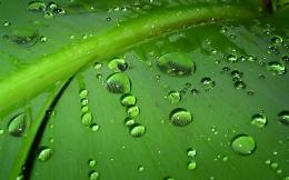 Wallpapers BackgroundsGreen Leaves Water Drops Wallpapers 660