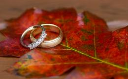 wedding rings on autumn leaves wallpaper 53228a0e7a051 jpg 1188