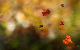 Autumn Leaves In Macro Shot Hd Wallpaper | Wallpaper List 486