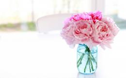 Text: white peony flower wallpaper White Peonies 222