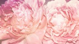 Peony Desktop Wallpaper | Hd Wallpapers 540