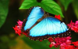 wallpapers, Butterfly close wallpapers, Beautiful Butterfly wallpapers 797