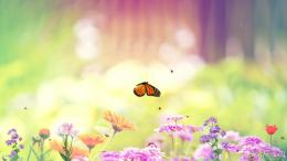 Download Free Butterfly Paradise Screensaver, Butterfly Paradise 934