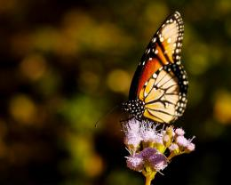Wonderful HD Photo of Butterfly on Flower | HD Wallpapers 1626