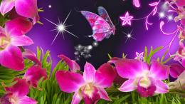 15 Beautiful Flowers and Butterflies Wallappers Free Download 248