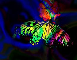 Wonderful Abstract Rainbow Butterfly Hd Wallpaper Other High 433