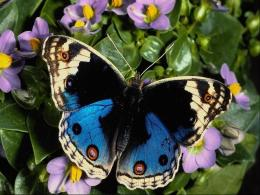 free wallpaper pc, free computer wallpaper download, Butterfly 1132