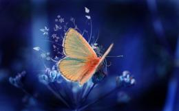 Wonderful orange butterfly on a beautiful flowerart designFree 993