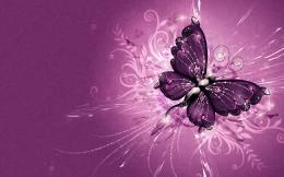 Wonderful purple wings of a butterflyHD wallpaper 282