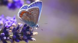 colour butterfly HD pictureVery attractive HD wallpaper of butterfly 720