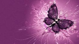 Wonderful purple wings of a butterflyHD wallpaper 1224
