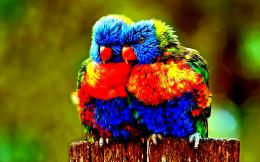 Colorful parrot birds friendship animals:High Contrast 1724