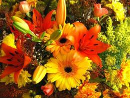 Colorful flowers for all my DN friends wallpaperForWallpaper com 884