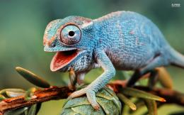 3d wallpapers cute chameleon wallpaper 35589 jpg 1075