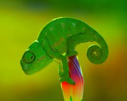 File Name Cute Chameleon Wallpaper 280 Pictures to pin on Pinterest 1998