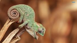 Baby Animals Chameleon Animal 638709 With Resolutions 1920×1080 Pixel 1141