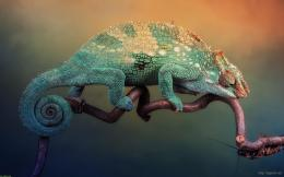 Wallpaper Cute Chameleon Wallpaper For Mobile Cute Chameleon Wallpaper 240