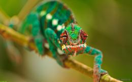 Home » Funny » Cute Chameleon Wallpaper For Mobile 474