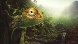 Chameleon Wallpapers | HD Wallpapers 1205