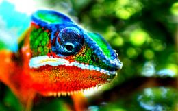 Cute Chameleon Wallpaper | Wallpaper Download 589