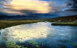 Floating Leaves Owens Valley California Hd Wallpaper | Wallpaper List 1557