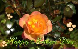 Wallpaper Free Download: Mothers Day 2013 desktop HD Wallpapers 139