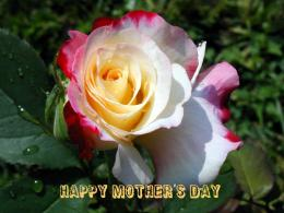 Happy Mothers Day Wishes | Beautiful Flower Wallpapers | Free 1129