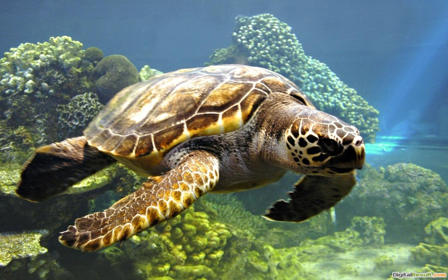 Download Sea turtle wallpaper in Animals wallpapers with all 1501