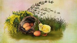 Little Chick And Eggs Hd Wallpaper | Wallpaper List 1537