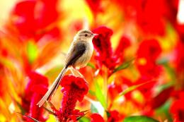 Bird And Summer Flowers Animals hd wallpaper #1637775 1799
