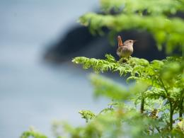 Bird, summer, twigs, green Wallpaper | 1920x1440 resolution wallpaper 322