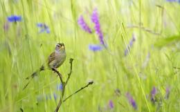 Summer bird in the grass Wallpaper | 1920x1200 resolution wallpaper 436