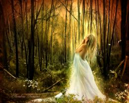 White Forest Fairy Background Wallpapers   Fairy Background Wallpapers 1312