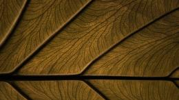 Download Wood and leaf surface wallpaper in Other wallpapers with all 267