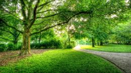 beautiful park wallpaper 4 jpg 1794