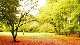 Golden Autumn, Beautiful Park Wallpaper 255