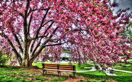 beautiful park wallpapers | Nice Pics Gallery 614