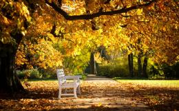 Beautiful Autumn Park And Bench Wallpapers1440x900697789 716