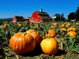 Best Pumpkin Picking Places in Jerseythisisitjersey com 471