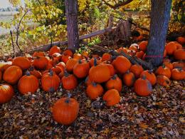 Pumpkin Field Wallpaper Free farm imagespage 5 1144
