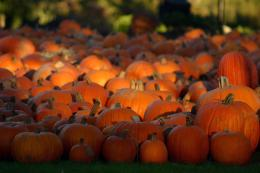 Pin Pumpkin Patch I on Pinterest 1778
